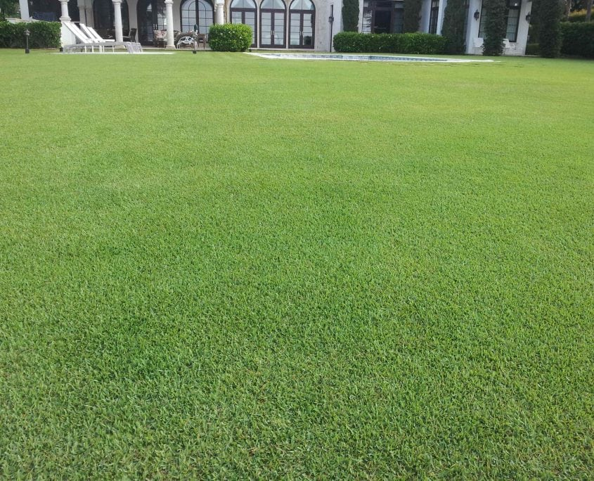 A beautiful example of our lawn fertilization services in Cornelia and Gainesville Georgia