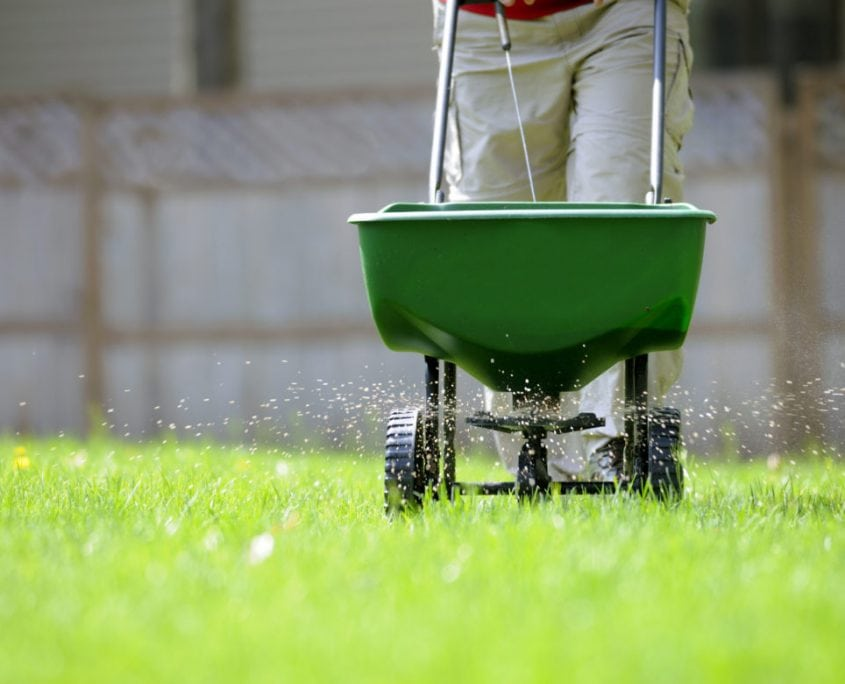 one of our Gainesville GA landscapers performing lawn fertilization services