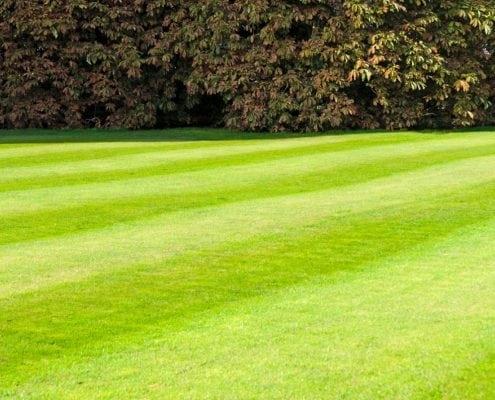 Perfect Gainesville GA landscaping job